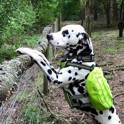 Hunderucksack für Outdoor Aktivitäten