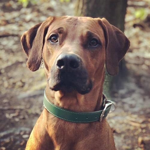 Halsband Mossy Green Grün / Braun große Hunde
