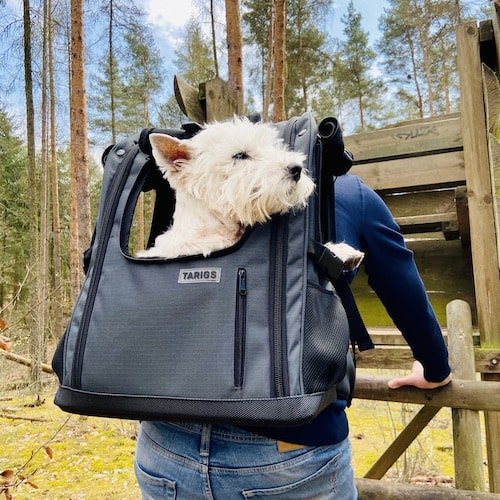 Westie sitting in trekking backpack for dogs by TARIGS