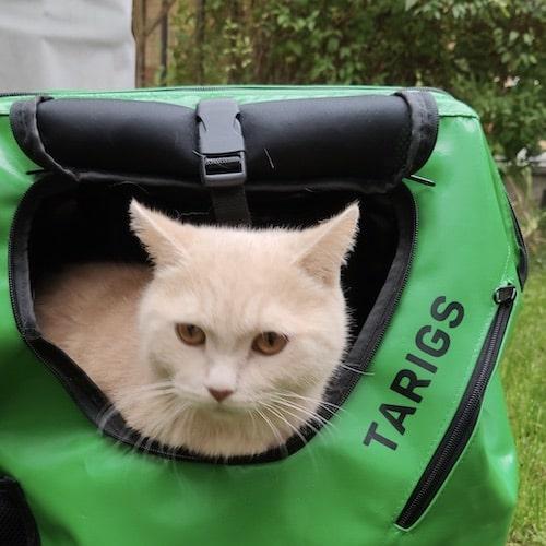 Cat sitting in green carrier backpack from TARIGS