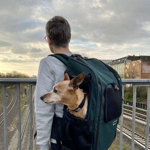Dog carrier backpack for medium size dogs