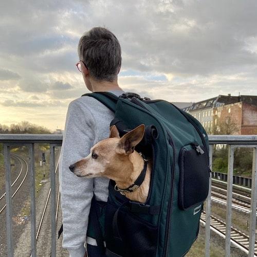 Dog carrier backpack for medium size dogs