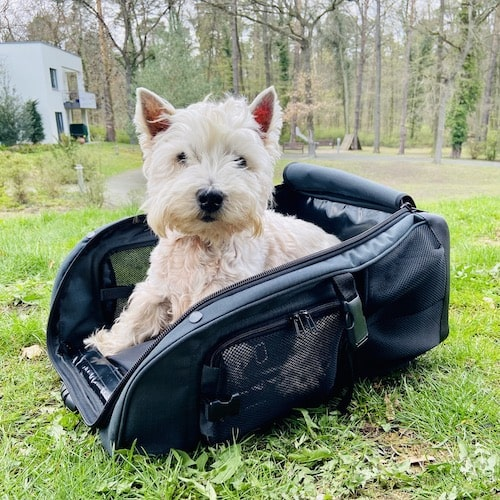 Dog backpack from TARIGS: Dog backpack and dog bed