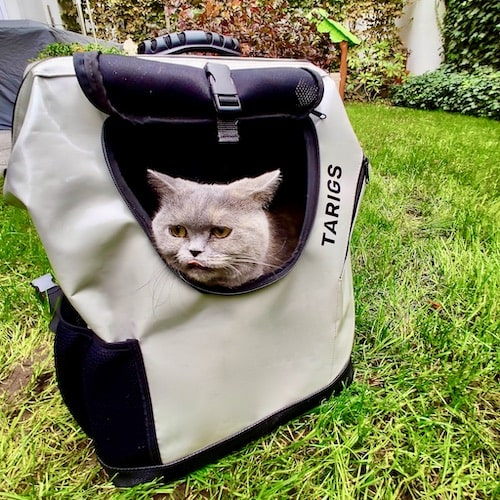 British shorthair sitting in gray cat backpack from TARIGS